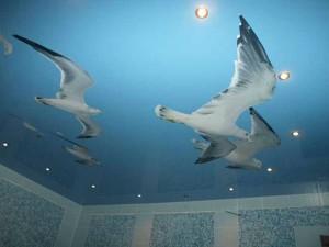 Натяжной потолок с рисунком чайки
